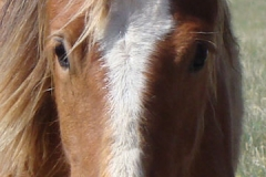 didley face closeup 2 5-16-15