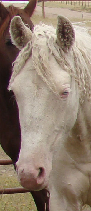 lilly face closeup leftish 10-8-11