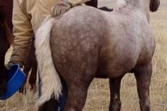 lark rear w don scratchin 905