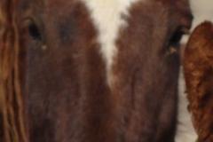 mia face closeup 1-29-12