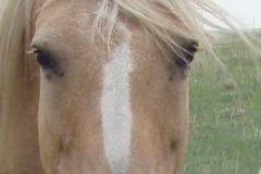 pal face closeup 7-21-12
