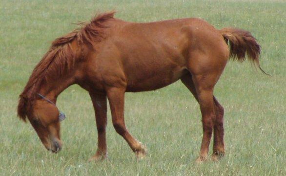 peep left head down tucked tail up tag on 6-28-09