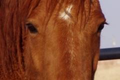 bp face closeup 4-10-09