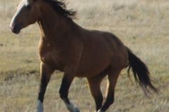 quirt front leftish running in 9-10-11