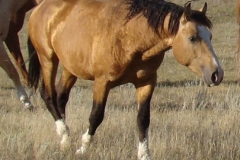 quirt front rtish 9-10-11