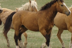 quirt front rtish trotting 5-28-11