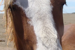 slide face closeup 5-26-12