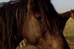 tern head closeup rt 71208