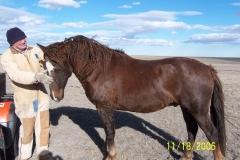 Bit-O-Wy Ranch Horses
