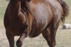 thor killer horse fake 6-28-13