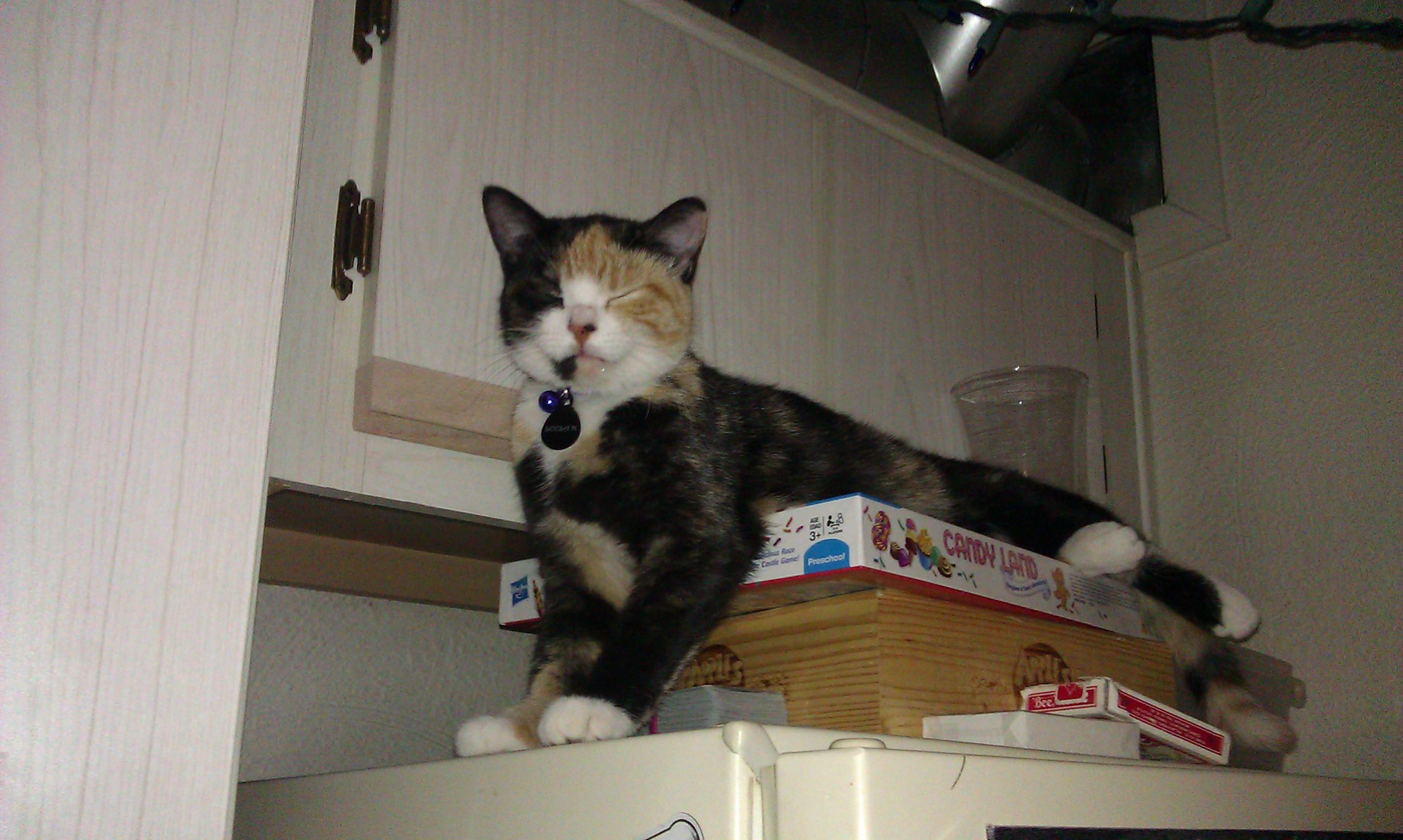lela on fridge