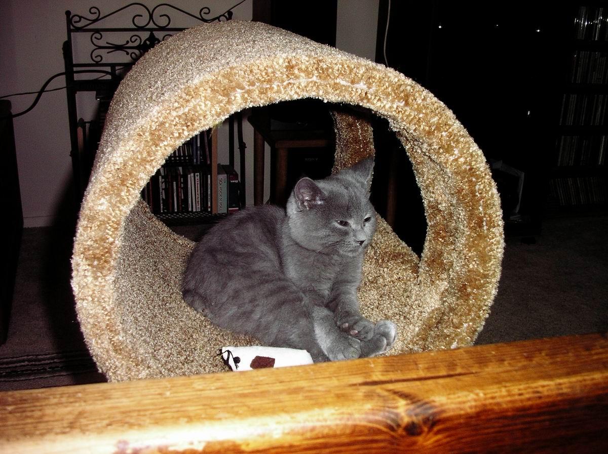 loki in carpet ring smug