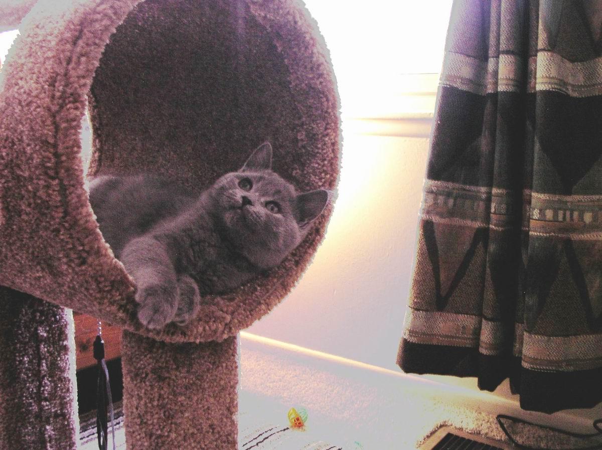 loki in carpet ring