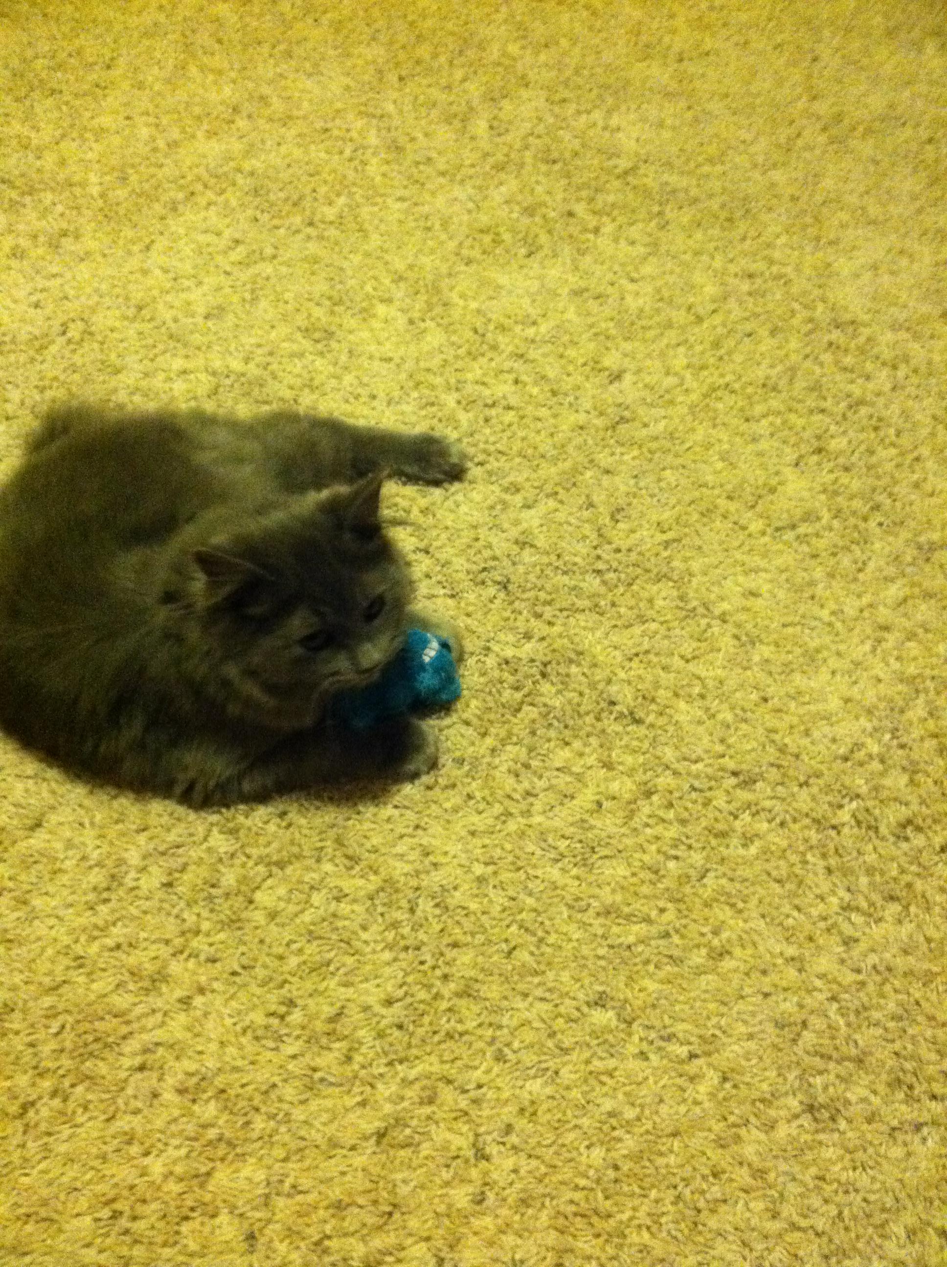 meeko with toy