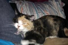 Lela snoozing on leg