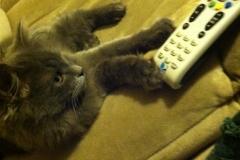meeko and remote