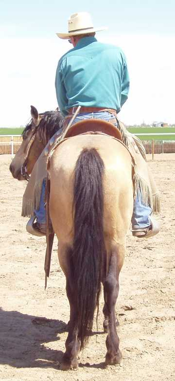 sun rearview under saddle