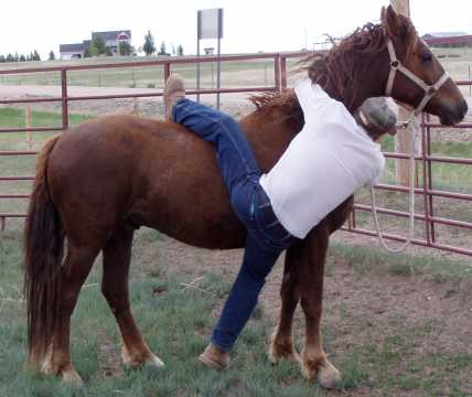 """Trainer demonstrates his """"fall off on purpose"""" dismount"""