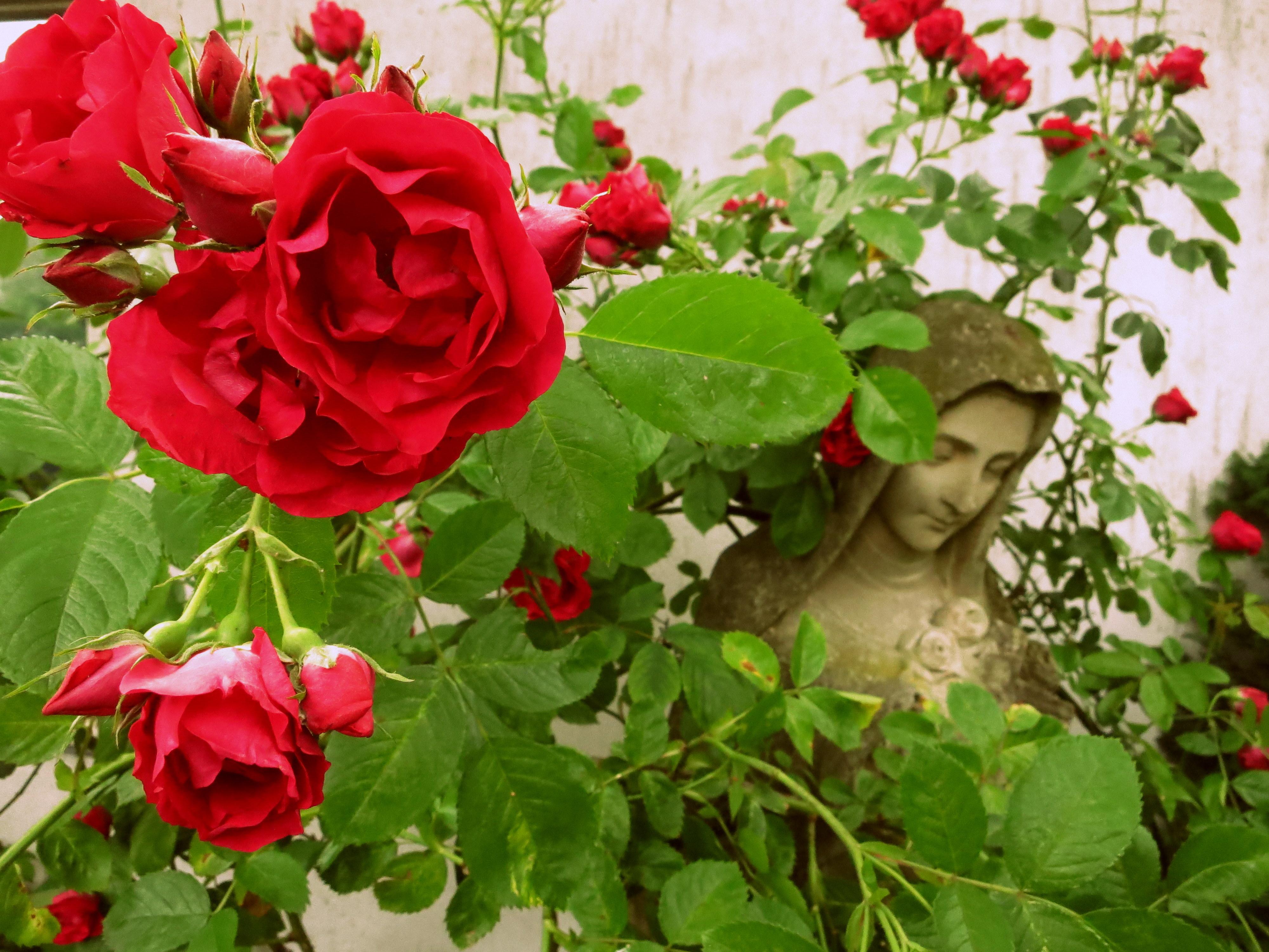 roses amsterdam open tuinen dag jordaan