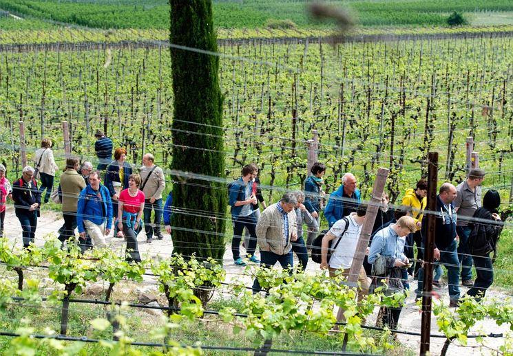Südtiroler Weinstraßen Wochen
