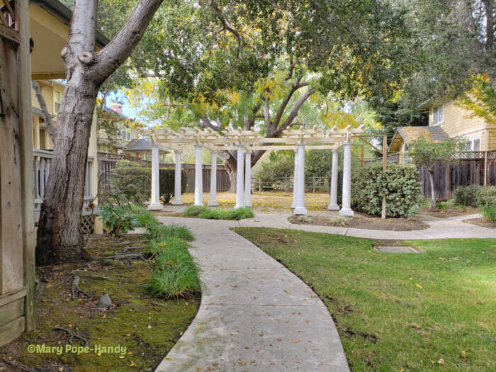 Pergola and large tree - Los Gatos duet homes