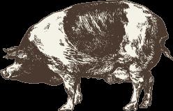 Pork & Ham Products