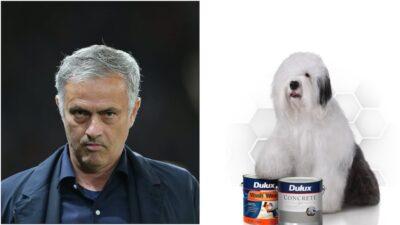 Mourinho dog