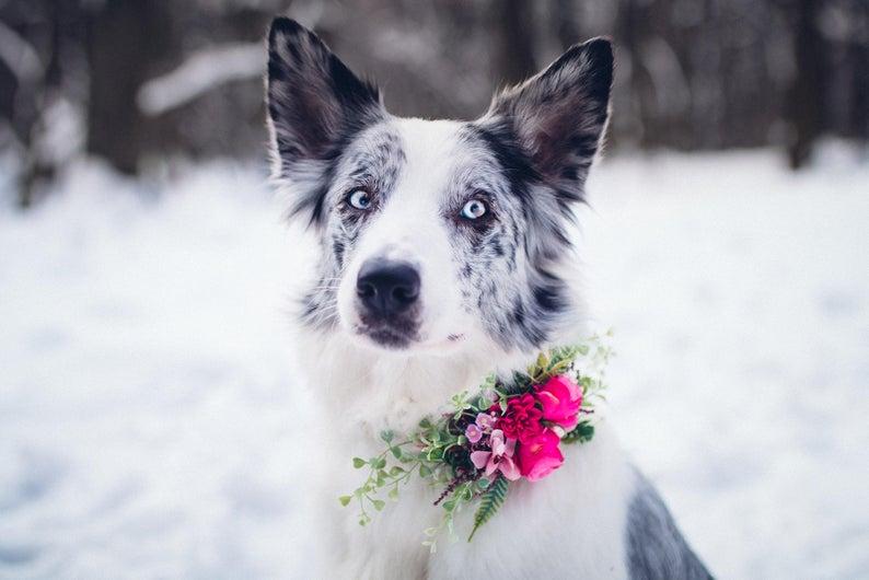 flower dog collar wedding