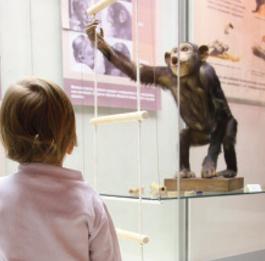 Exhibit Express ships museum exhibits