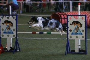 Wood River Agility Classes