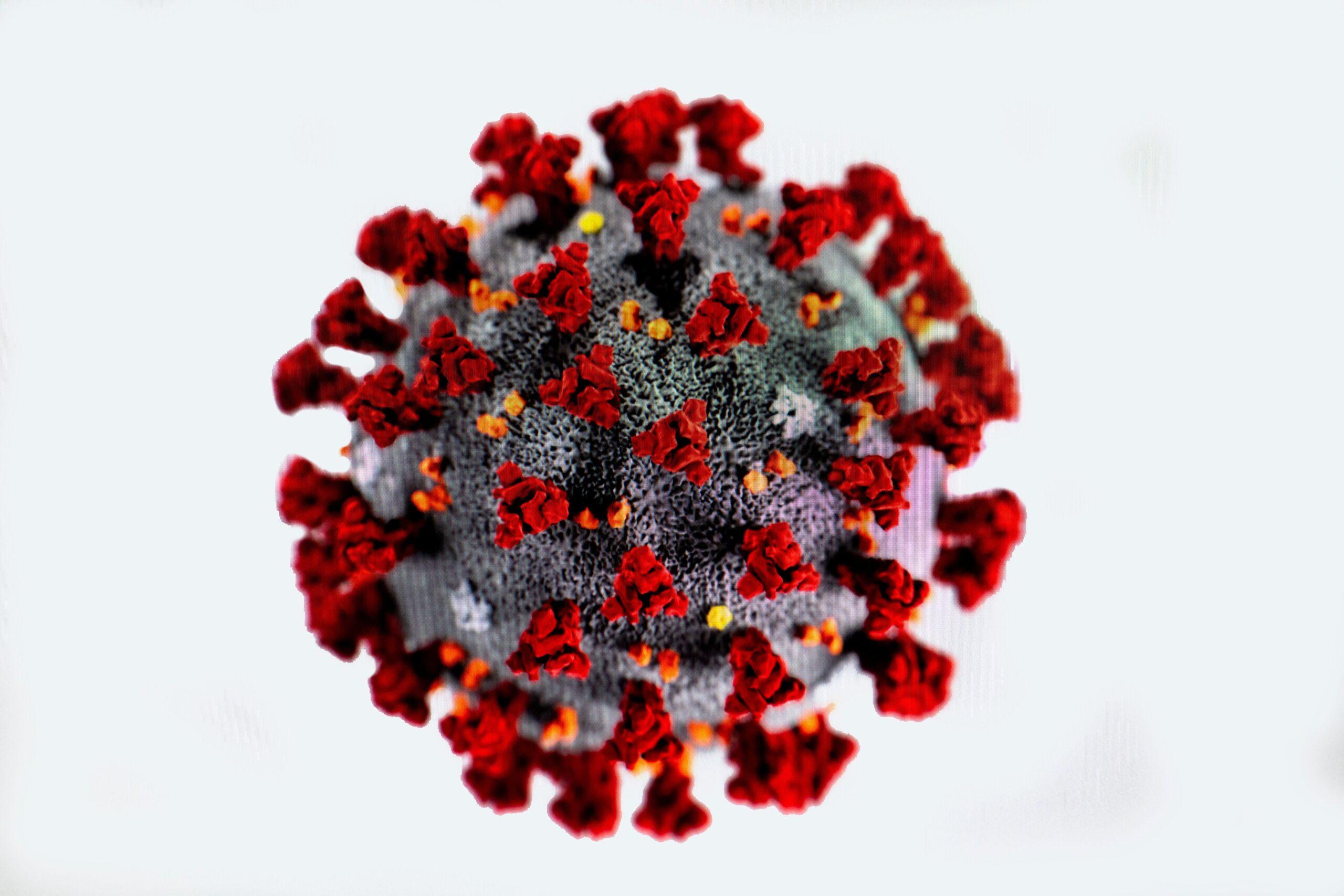 Image of Coronavirus COVID-19