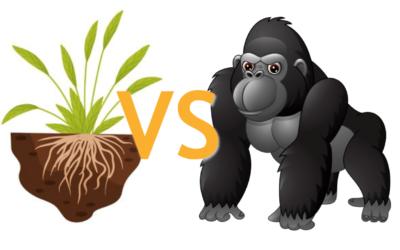 Grassroots vs. Guerilla Marketing