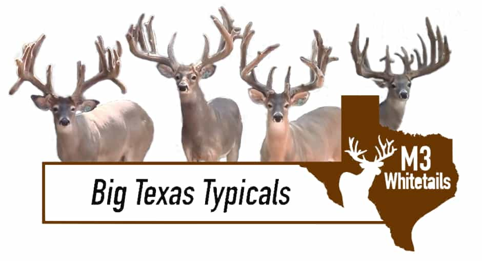 Deer Breeder In Texas Whitetail Deer For Sale