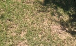 Should I Seed Bare Areas in My Bermudagrass Lawn?