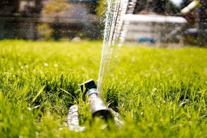 How Much Should I Water My Lawn?