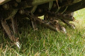 Why Aerate & Seed a Tall Fescue Lawn