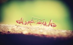 What Can I Do About Fire Ants On My Lawn?