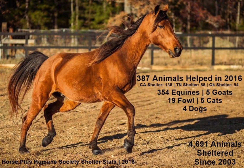 animal-stats-2016