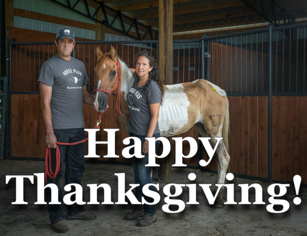 Happy Thanksgiving Horse Plus Humane Society