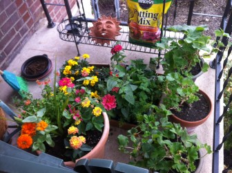 Move your plants to a protected east or south facing side of your house.