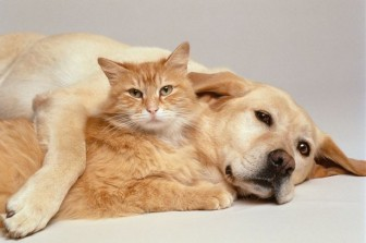 A-cat-and-dog-together