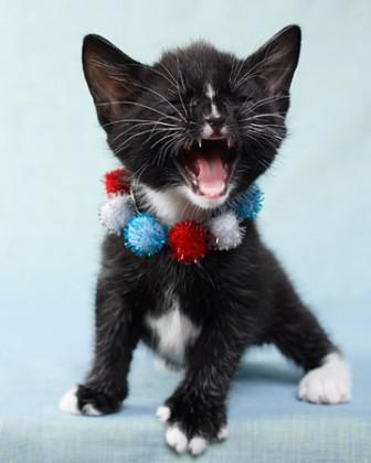 4th kitten