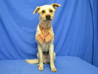 Buddy - Available for Adoption
