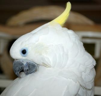 kkookkoofor coconut20001