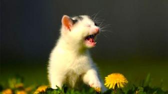 kitten-sneezing-for-blog