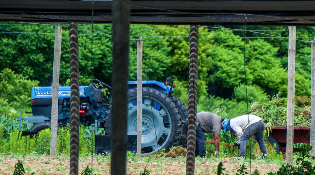 Temporary farm workers don't have access to adequate health care