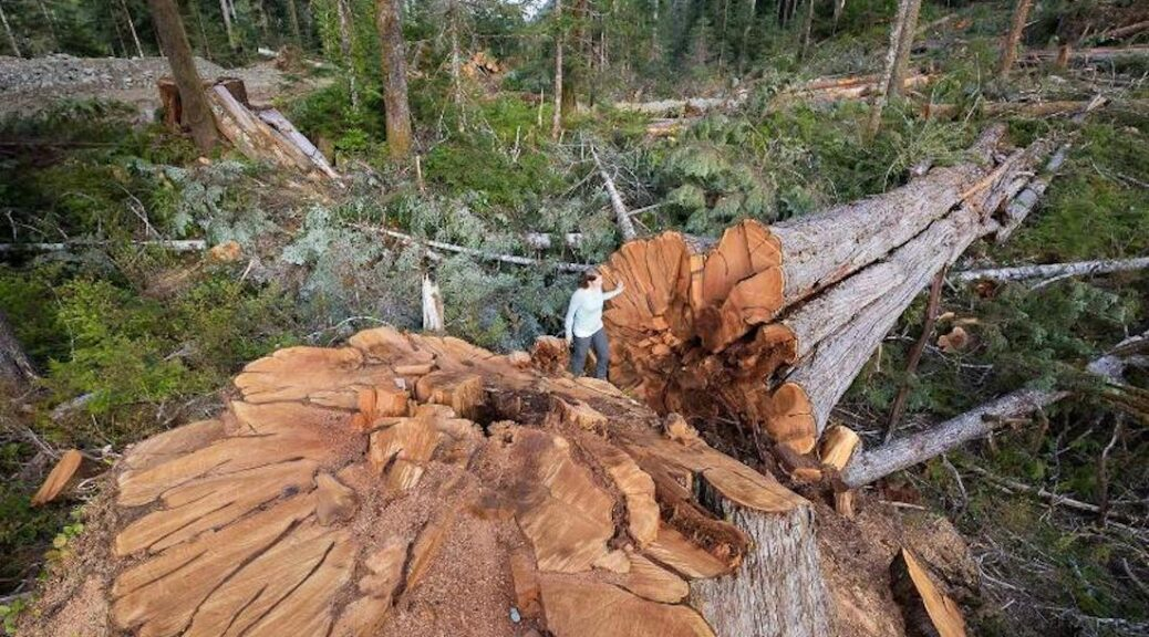 time to move towards a more sustainable forestry