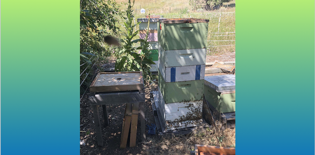 funding for small scale beekeepers