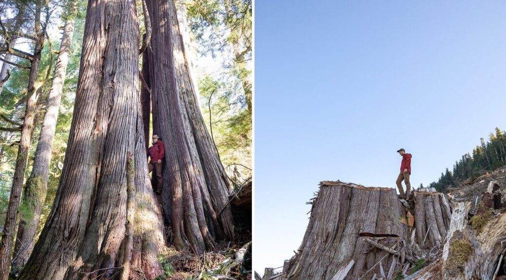 B.C. communities are rallying Friday in a call to stop the logging of ancient forests, like those above in the Caycuse watershed on Vancouver Island.