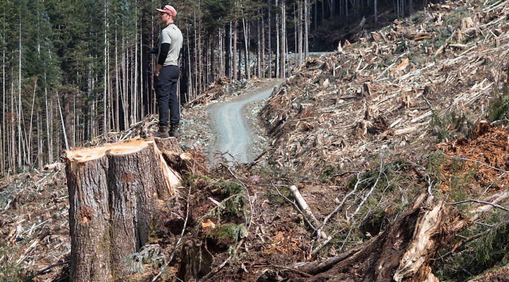 BC will not impose a moratorium on clercutting old growth forests